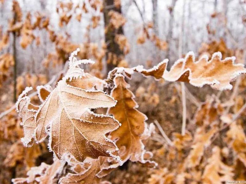 В Брянской области наступят холода