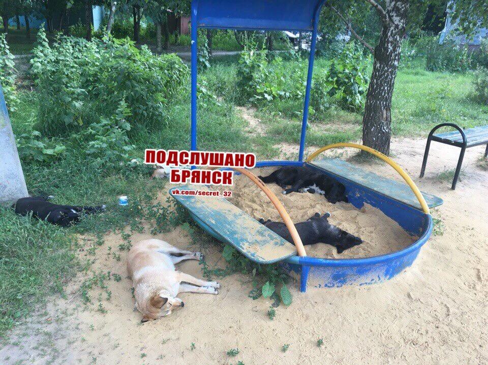 В Брянске наглые собаки отобрали у детей песочницу