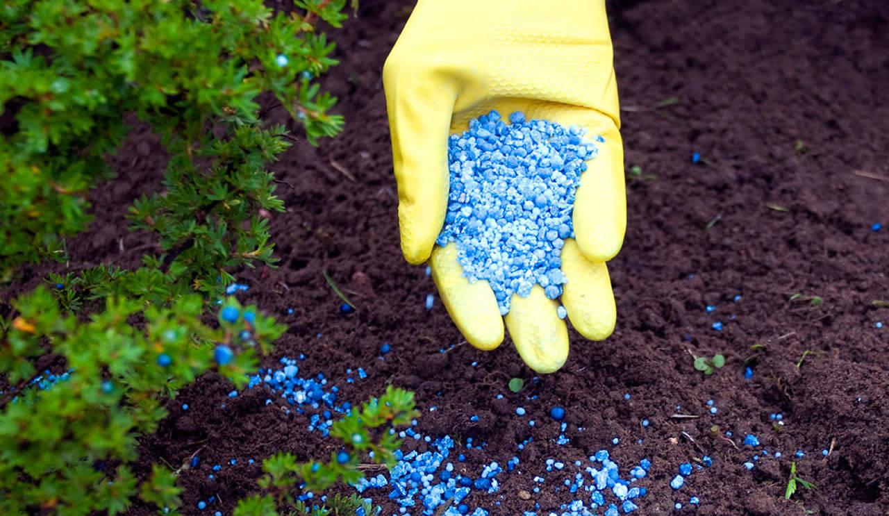 Сельхозпредприятие Брянского района оштрафовали за пестициды в почве
