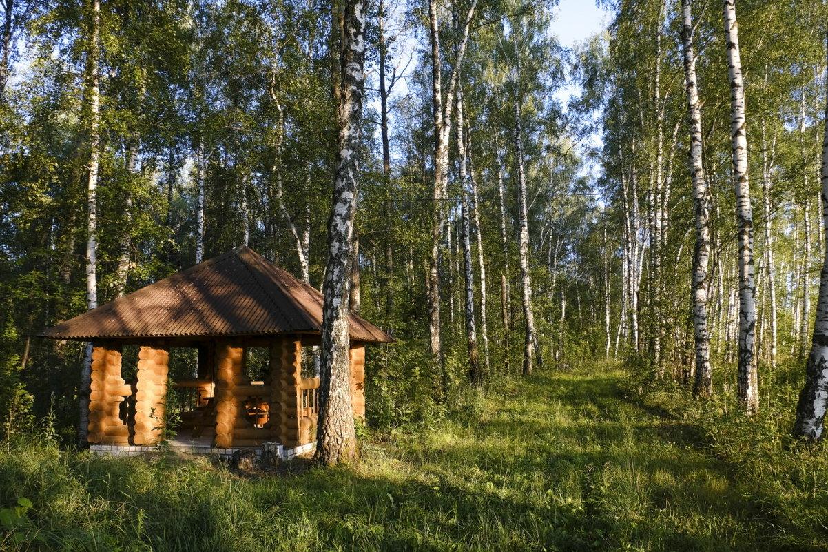 В Брянской области аннулировали запрет на посещение гражданами лесов