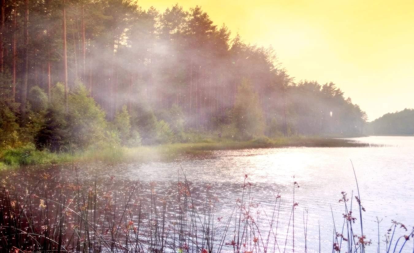 В Брянской области 28 августа прогнозируют дождь с грозой и туман