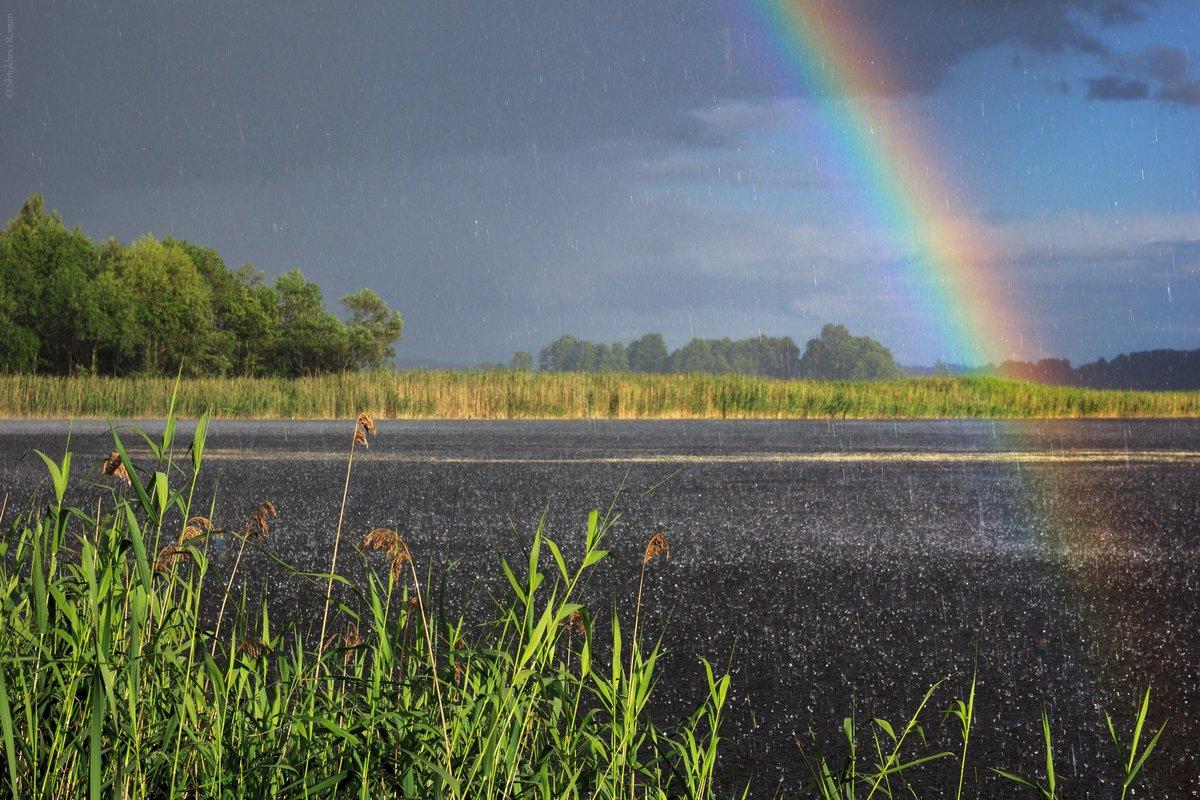В Брянской области 3 сентября прогнозируют 17 градусов тепла и дождь