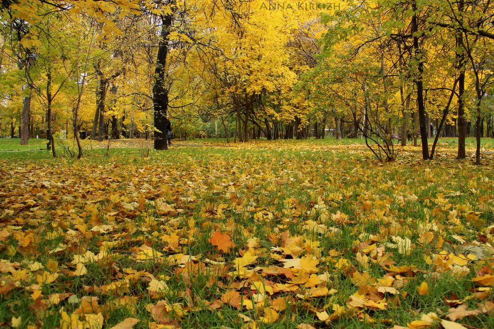 МЧС предупредило жителей Брянской области о заморозках до минус 3 градусов и тумане 7 сентября