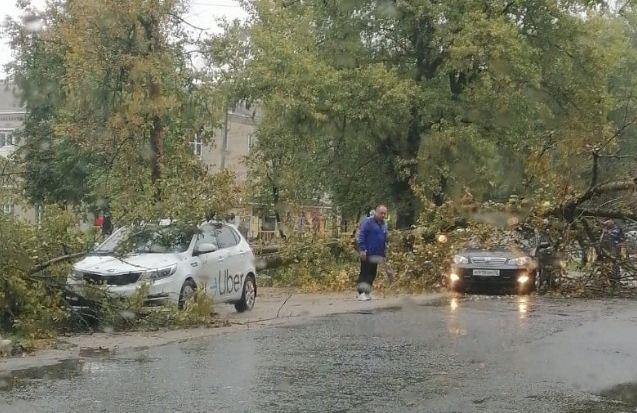 В Бежицком районе Брянска из-за сильного ветра дерево рухнуло на машину
