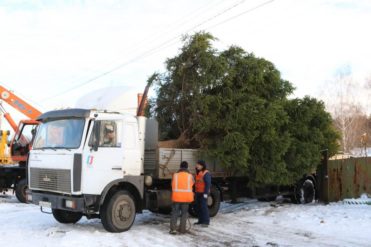 В Брянске продолжаются поиски главной новогодней ёлки 2022 года