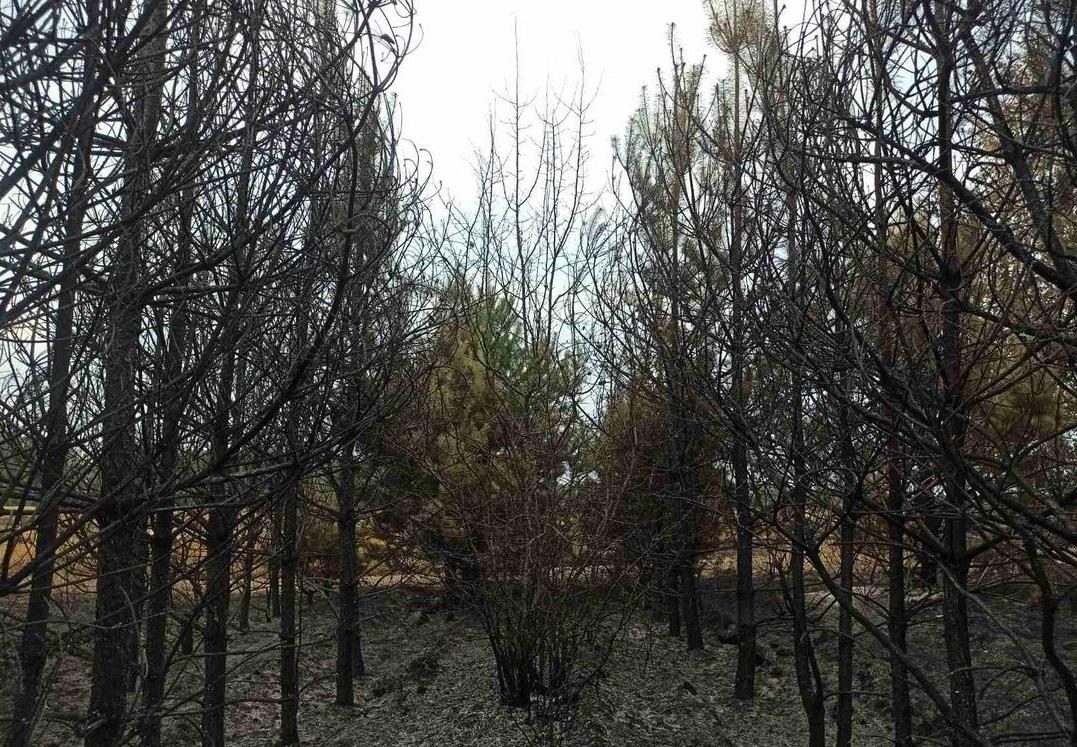 Виновник лесных пожаров в Брянской области заплатил штраф в размере более 2,4 млн рублей
