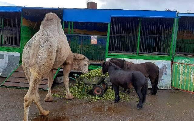 Брянский зоопарк получил лицензию Россельхознадзора на содержание животных