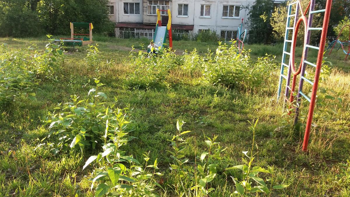 В Брянске заросли травы во дворе дома на проспекте Станке Димитрова сняли на фото