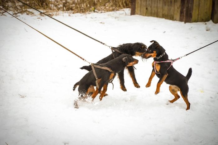 В городе Клинцы Брянской области прошла выставка охотничьих собак