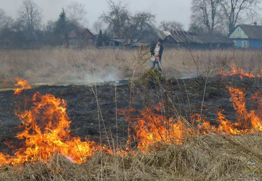 В Гордеевском районе Брянской области поймали поджигателя травы