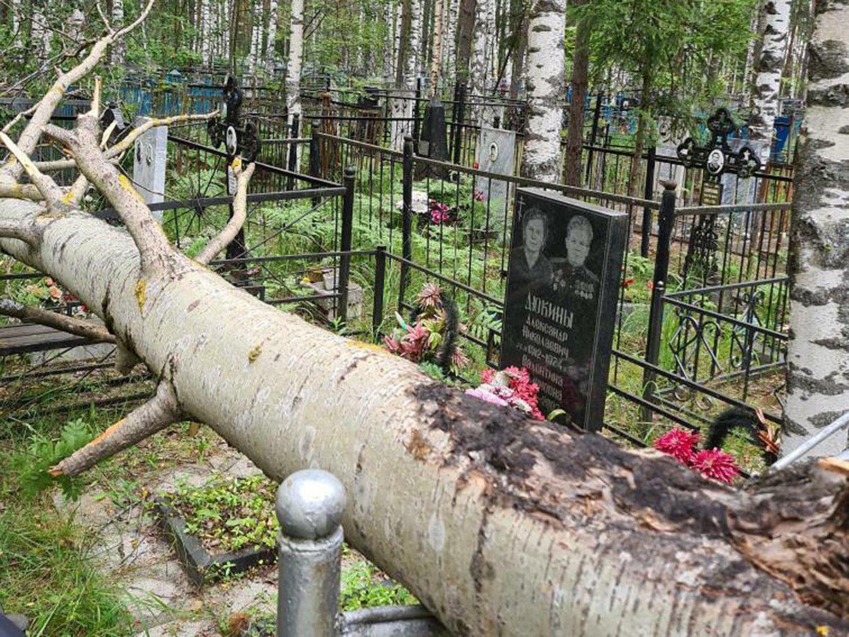 На кладбище в Брянске из-за сильного ветра на могилы упало дерево