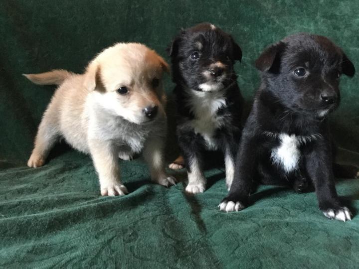 В Брянской области сообщили о семье, которая поедает щенков
