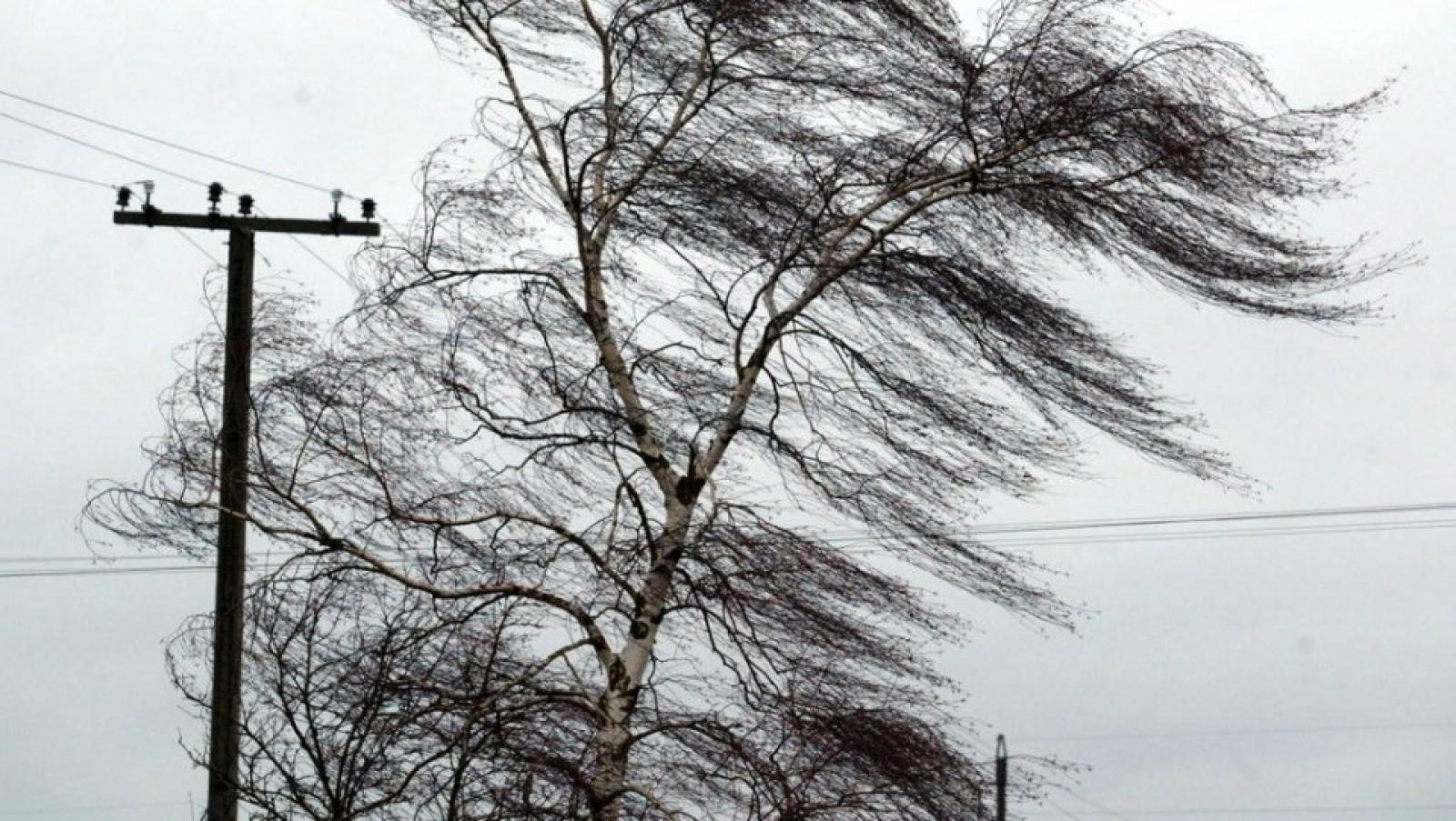 В Брянской области 5 мая ожидается ураганный ветер до 18 метров в секунду