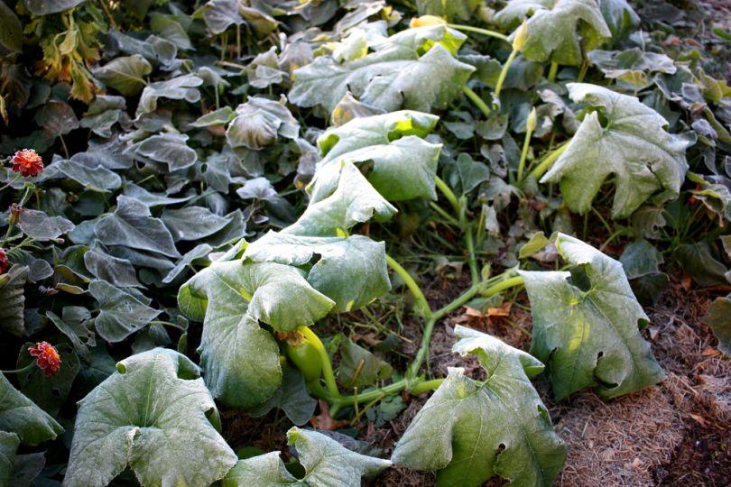 МЧС предупредило жителей Брянской области о заморозках и гибели растений 10 и 11 мая