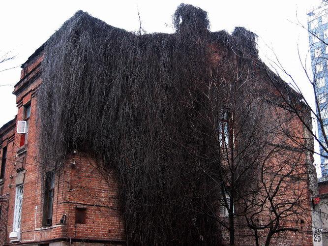 Брянцев на улице Горького пугает заросший старый дом