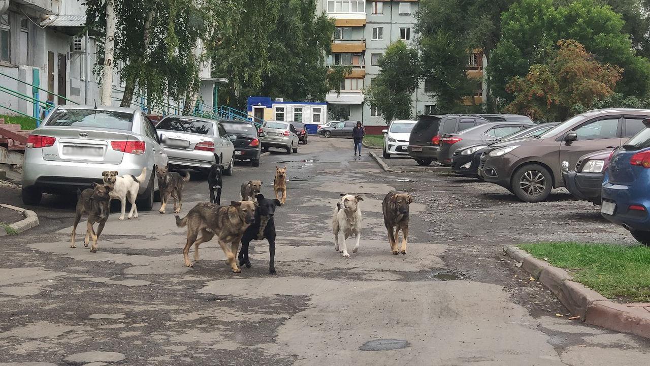 В Брянске стая из 11 собак атаковала жителей Володарского района