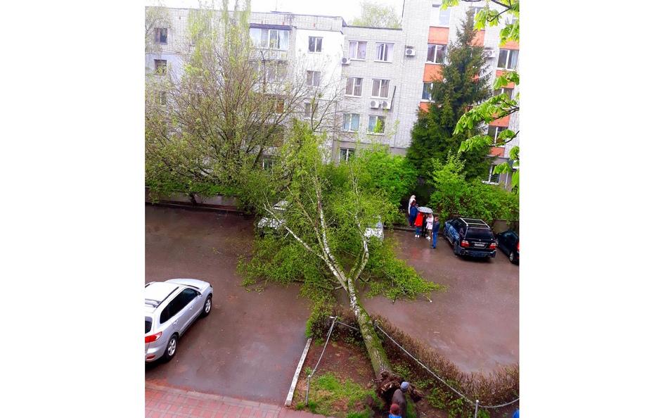 В Брянске дорожники убрали рухнувшее на парковку на улице Софьи Перовской дерево