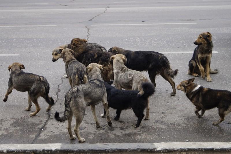 В городе Новозыбкове автобазу оккупировала стая бездомных собак