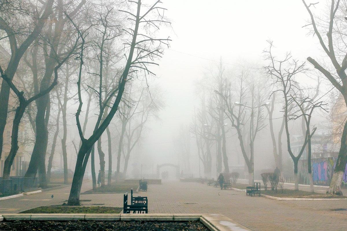 В Брянской области из-за сильного тумана объявили желтый уровень опасности
