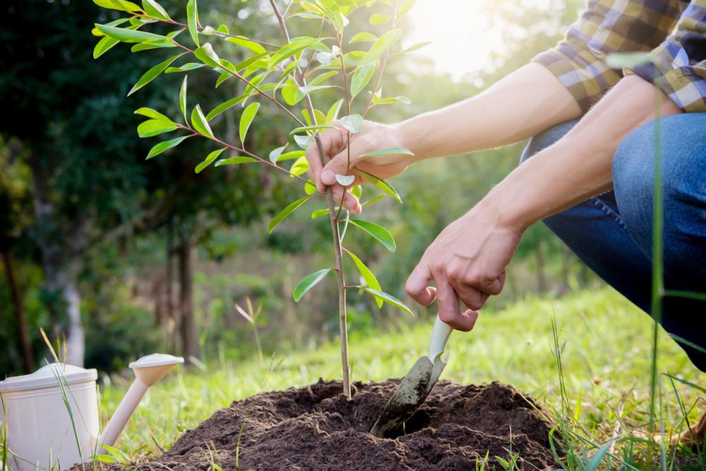 В ботаническом саду БГИТУ на экологической акции посадили гортензии