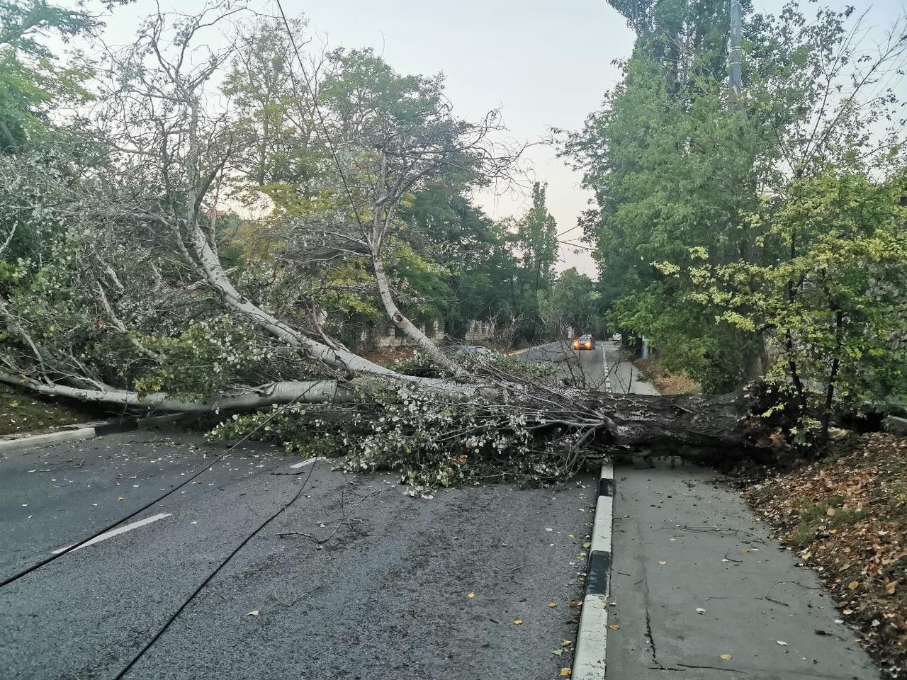 В Брянске из-за ураганного ветра на улице Кольцова на дорогу рухнуло дерево