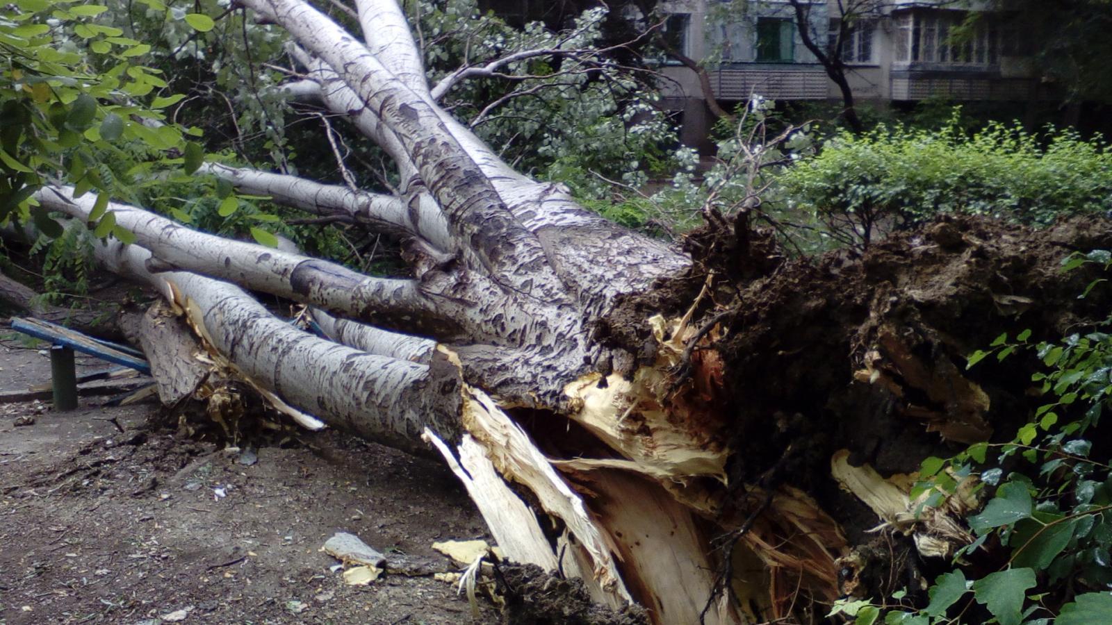 В Советском районе просят убрать рухнувшее дерево по улице Докучаева