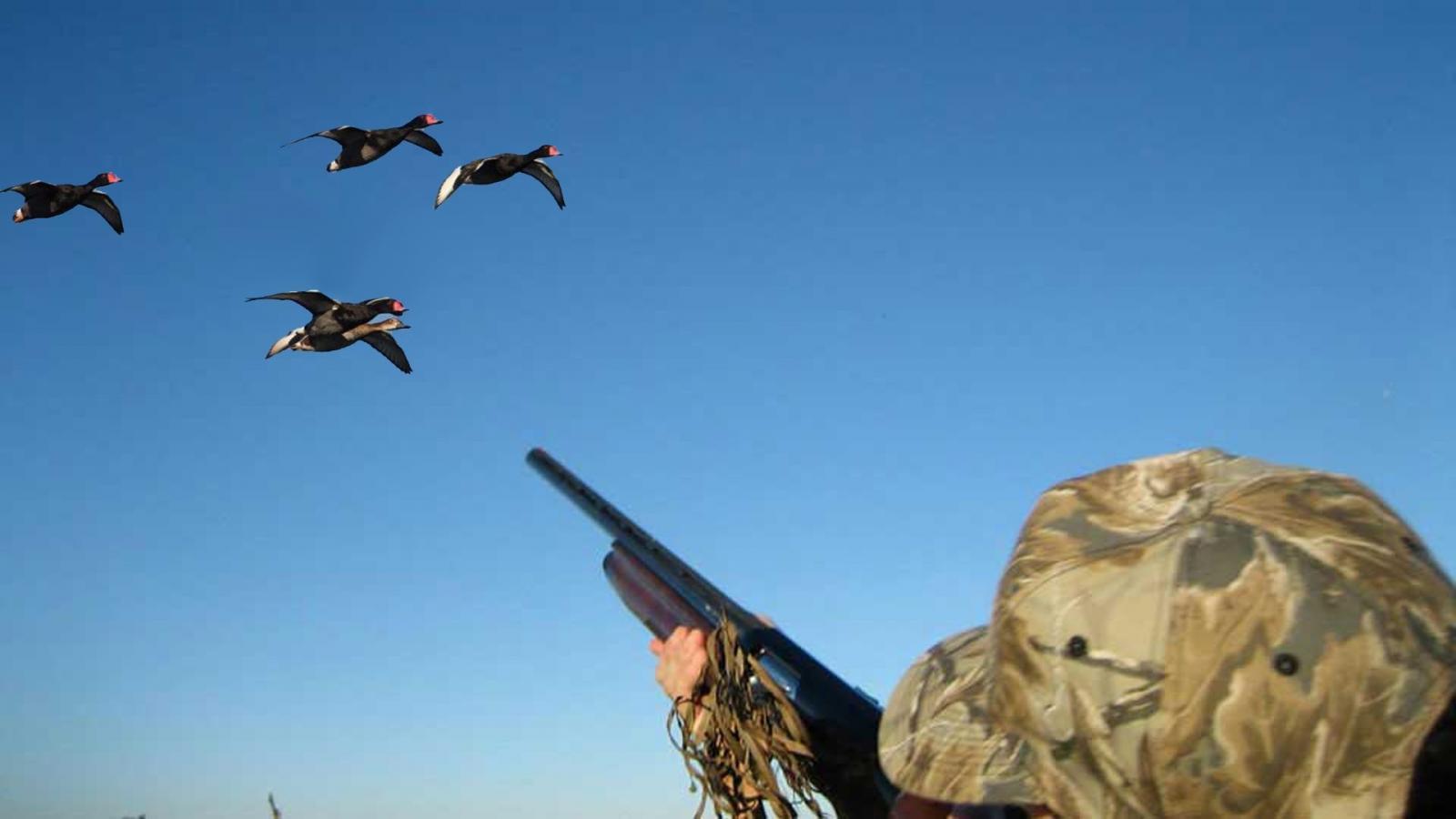 В Брянской области охота на диких птиц откроется 14 августа