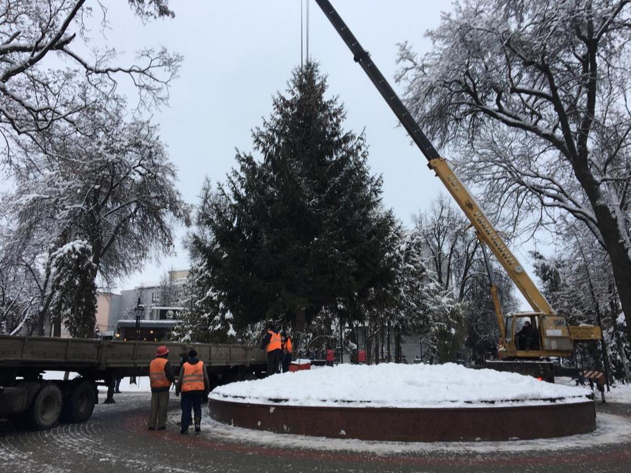 В Брянске идут поиски главной новогодней ёлки 2022 года