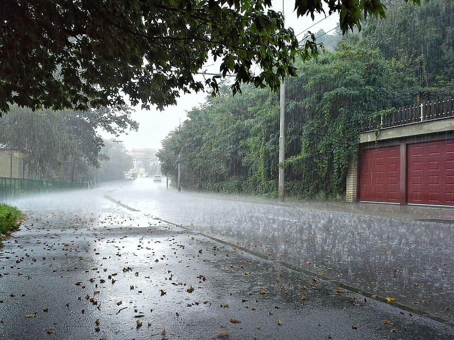 МЧС предупредило брянцев о ливнях, грозе и граде 16 июля