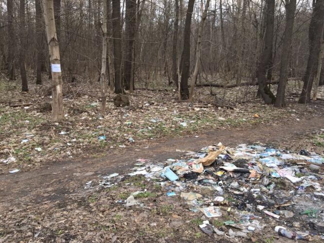 Брянцы жалуются на зловонный мусор в лесу