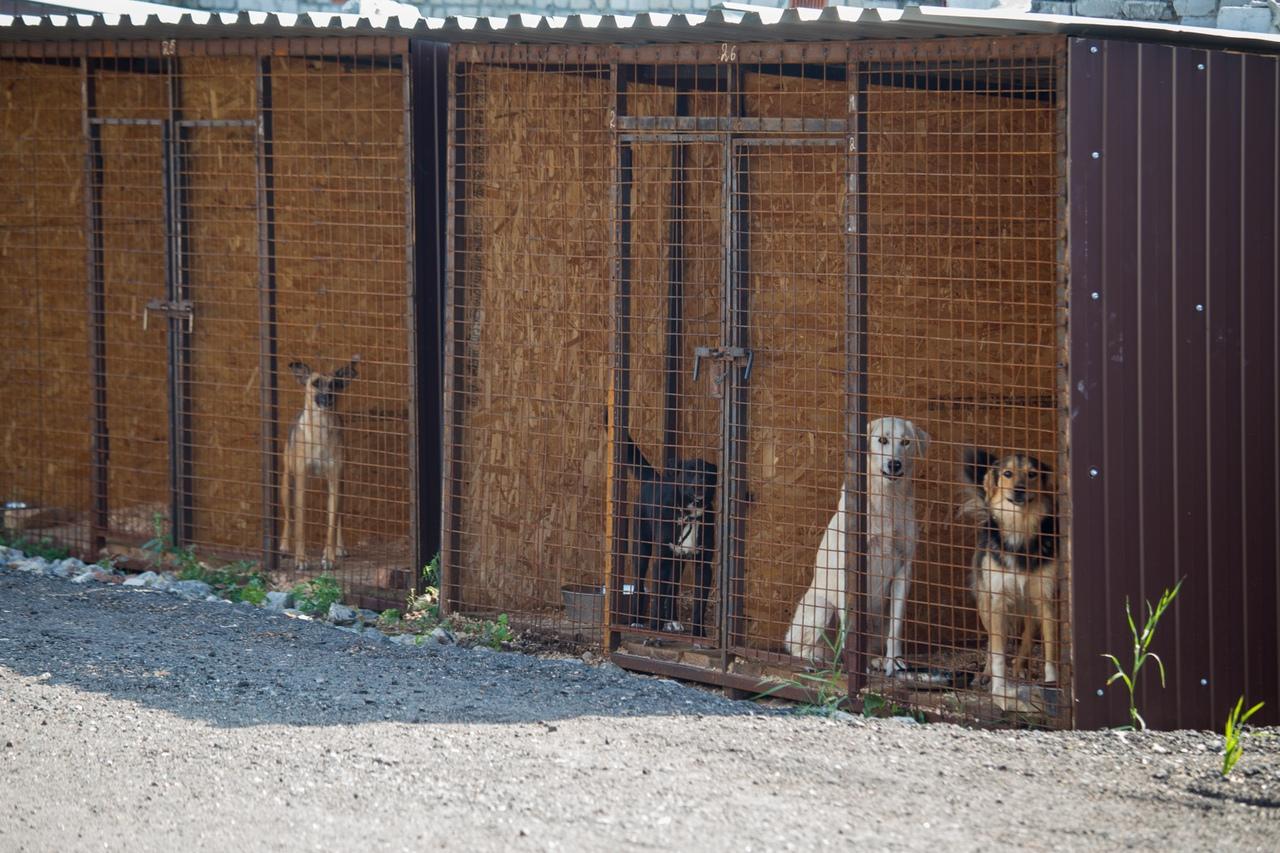 Приют для бездомных животных в Бежицком районе Брянска получит официальный статус