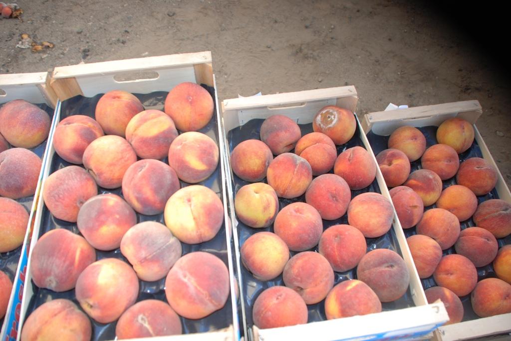 В Брянскую область не пустили 10 тонн зараженных трипсом персиков из Турции