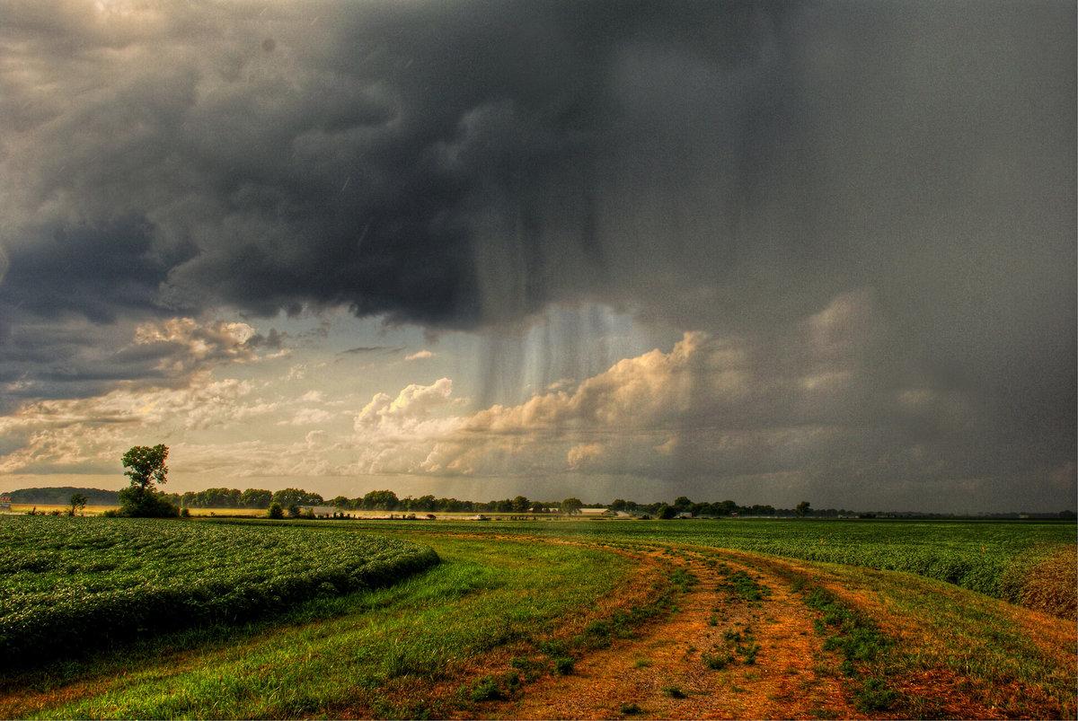 Жителям Брянщины в субботу обещают дождь с грозой и 28 градусов тепла