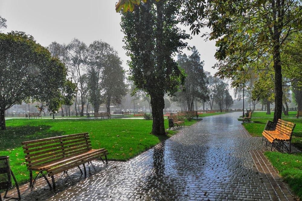 Жителям Брянщины во вторник обещают дождь с грозой и 32 градуса тепла