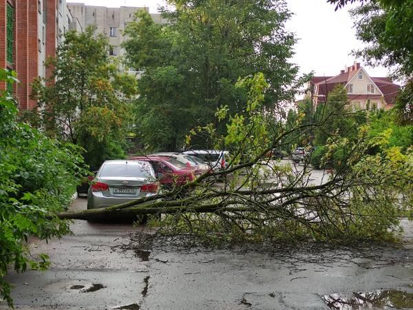 На улице Грибоедова в Брянске рухнуло дерево