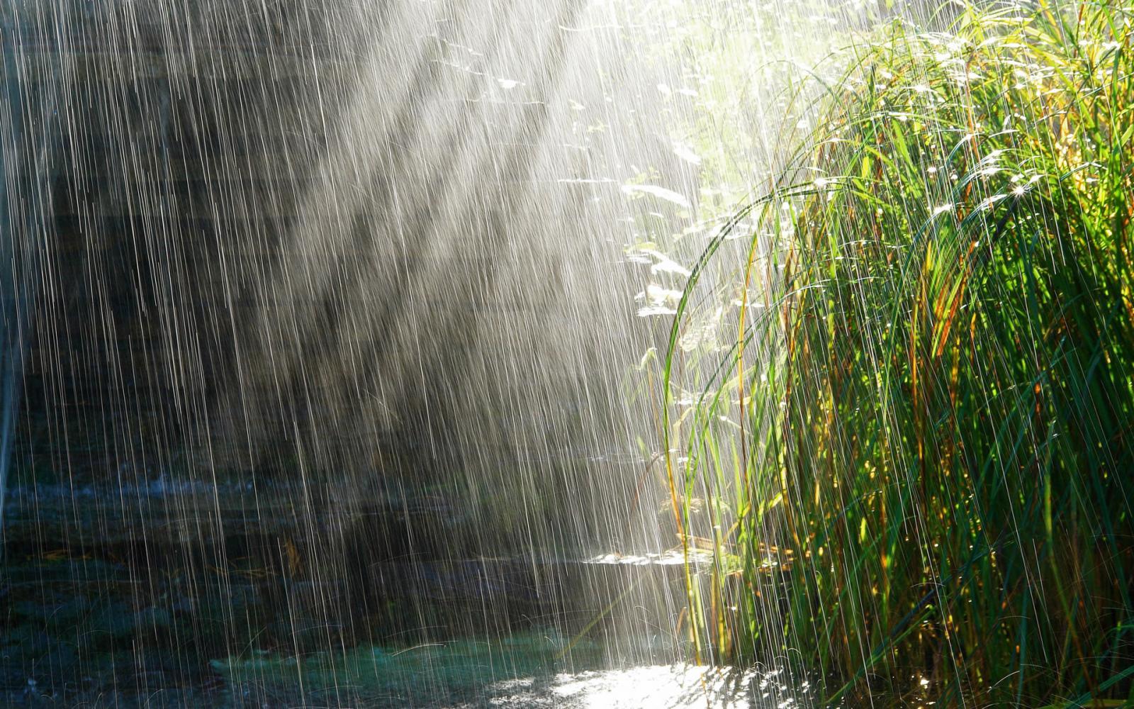 Завтра в Брянске ожидается дождь с грозой