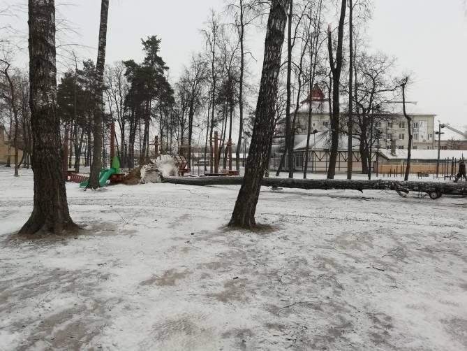 В Брянске рухнуло дерево в Майском парке