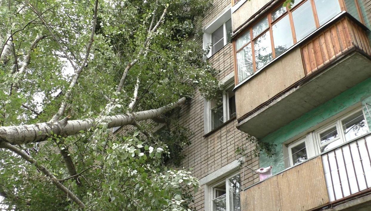 В Брянске рухнувшее дерево повредило частные дома и забор