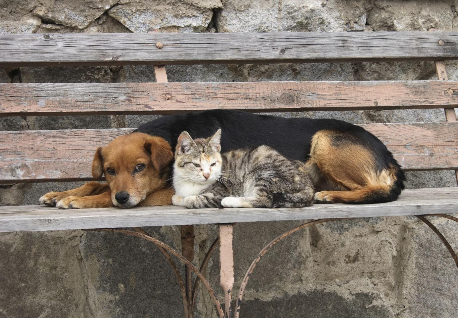 В Брянске начинают строить приют для бездомных собак