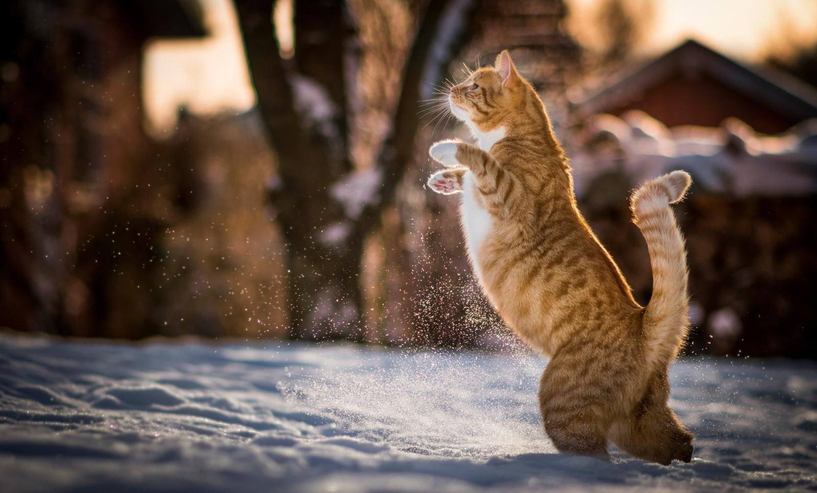 На Брянск обрушился снегопад