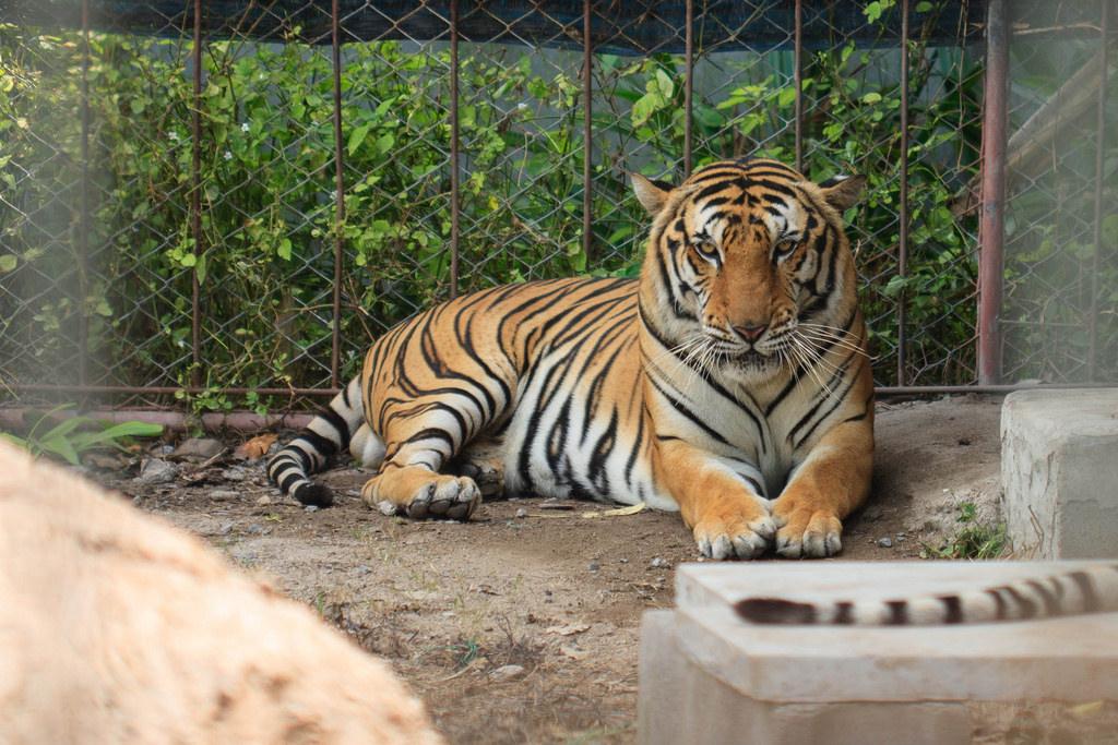 В российских зоопарках установили новые нормы содержания животных