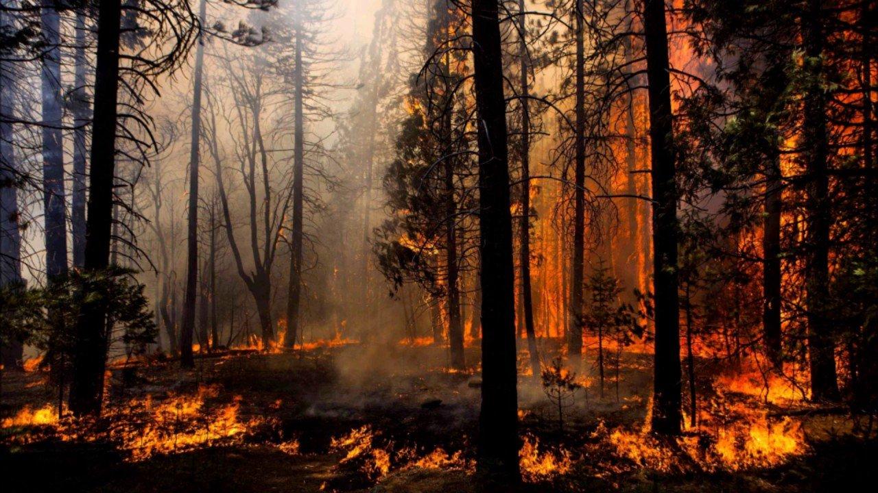 Возле брянского поселка произошел лесной пожар
