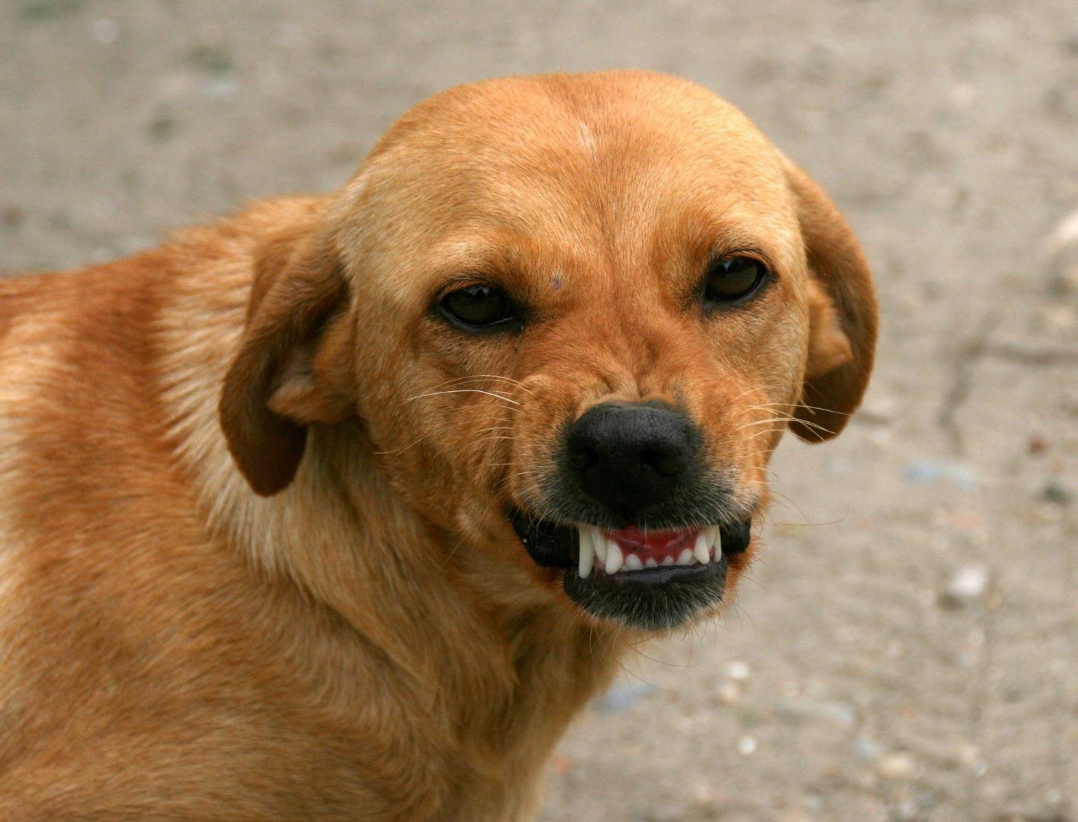 В Брянске на улице Медведева собаки прокусили ногу женщине