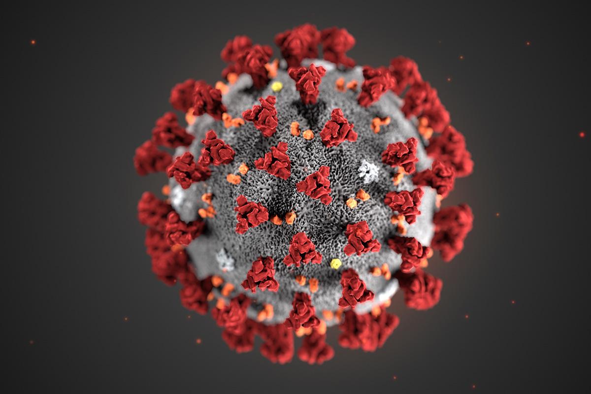 Ученые сообщили о способности коронавируса повреждать печень и почки