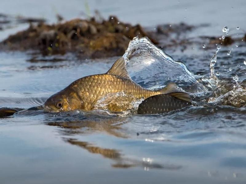 В Десне под Брянском произошла массовая гибель рыбы