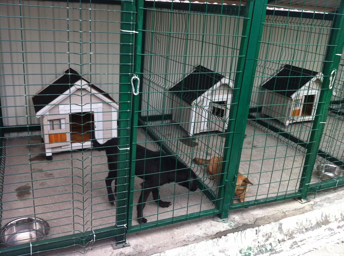 На 19-м заседании Брянского городского Совета строительство приюта для животных согласовали