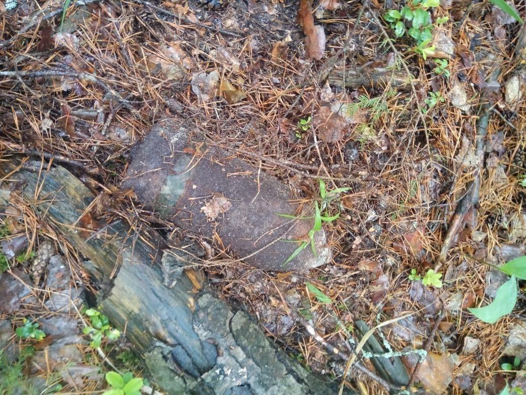 В лесу под Брянском нашли артиллерийский снаряд