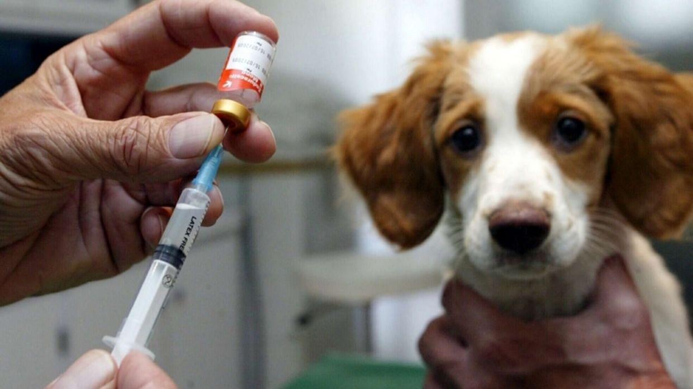 В Брянской области началась вакцинация домашних животных от covid-19