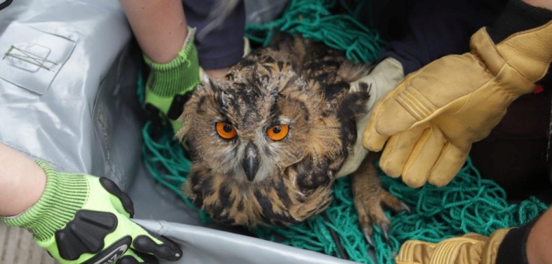 В брянском санатории «Затишье» спасли совенка Клювика