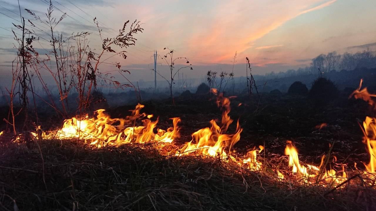 На Брянщине с начала текущего года выявили 94 пала травы